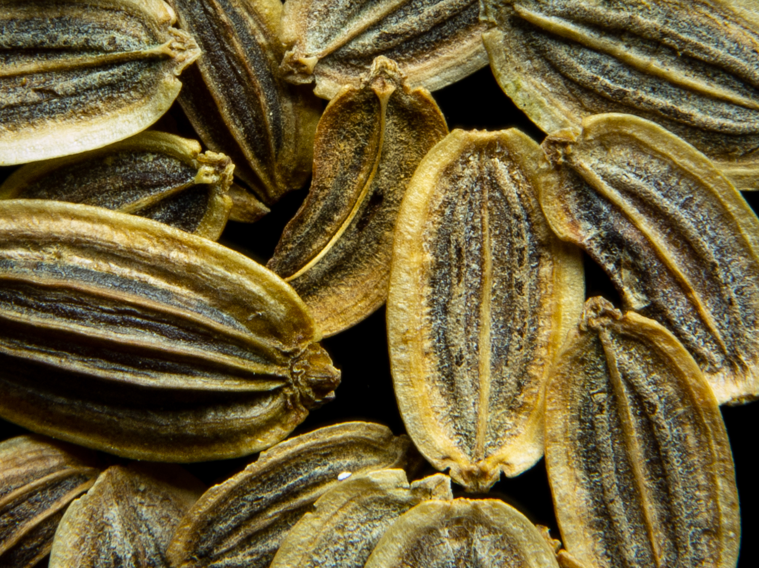 Dill Seed-2